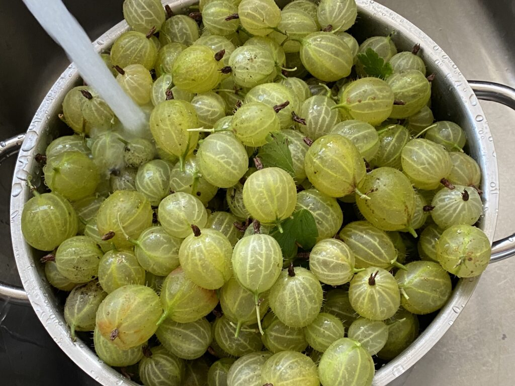 Bowl of Fresh Gooseberries under a running tap of water